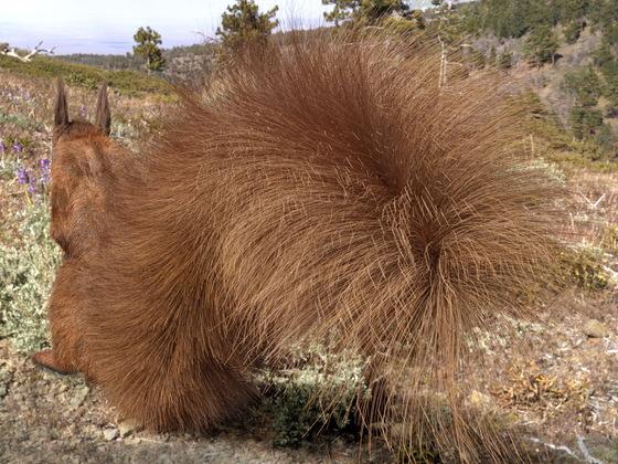 Hörnchen, echt haarig!