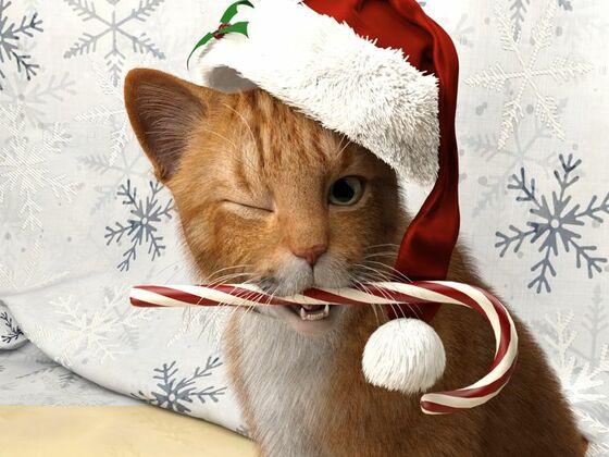 Weihnachts Kater