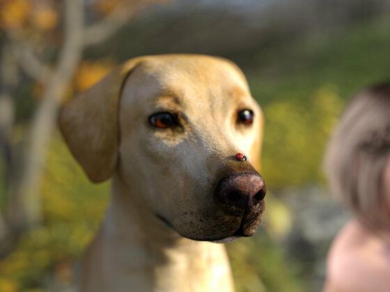 Marienkäfer auf der Hundenase