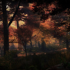 Autumn Evening in the old Grove
