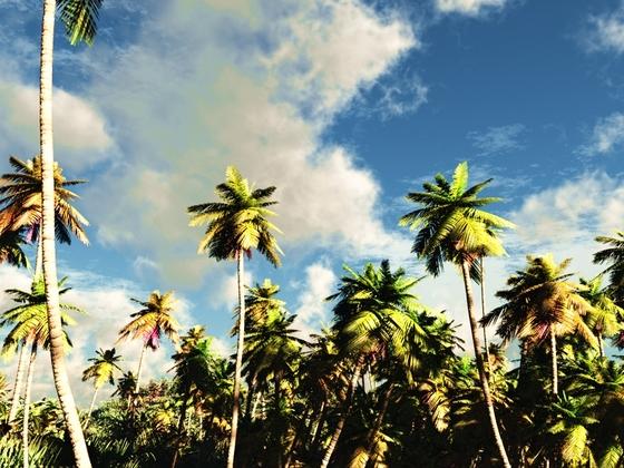 Tropisch I
