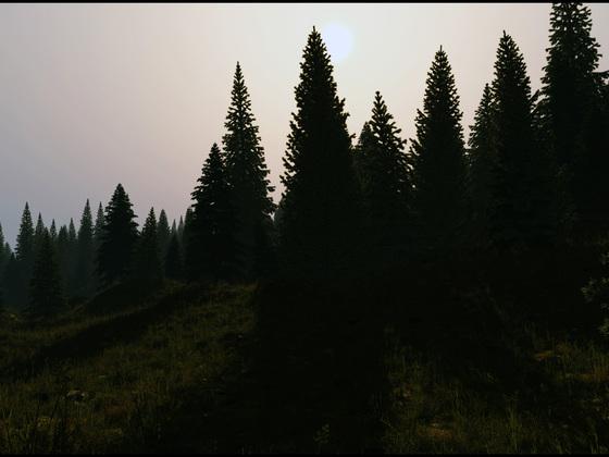 Waldrand_A/Licht Var1
