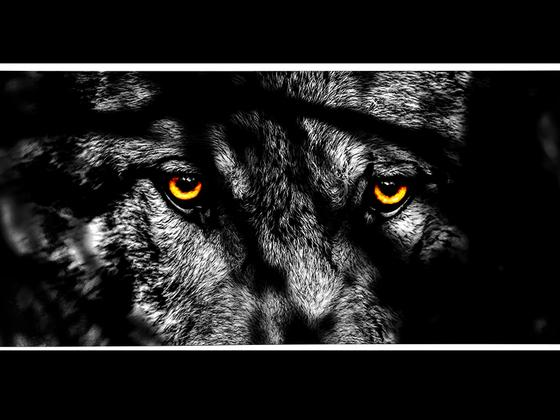 Wolfsmoon