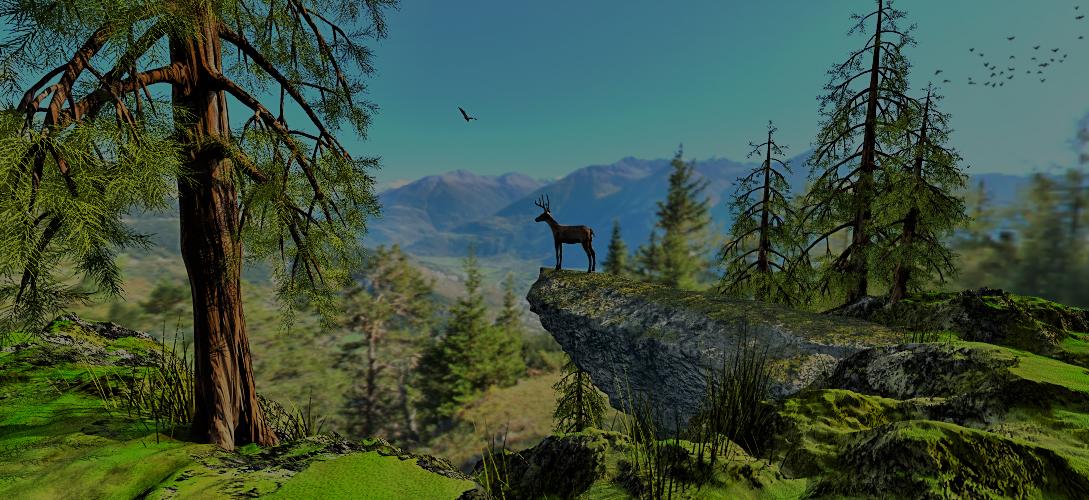 Schöne Aussicht im Schnalstaler Wald