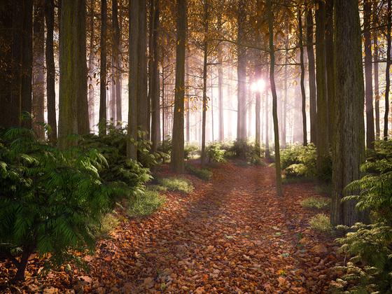 Sonnenaufgang im Herbstwald