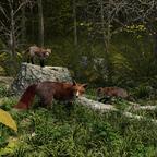 Füchse im Wald