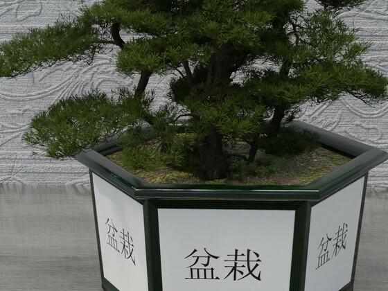 Chinesischer Bonsaiwald