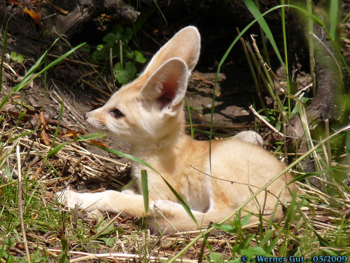 Diese Ohren! :D