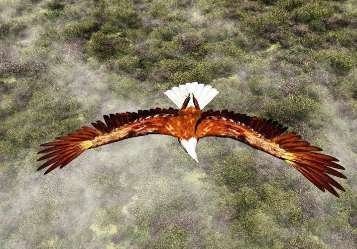 Adler im Herbst