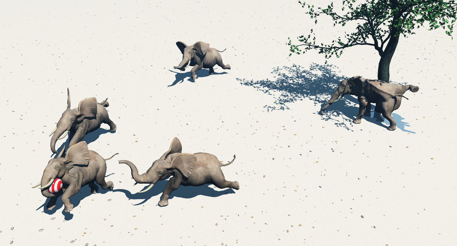 Gestern in der Kalahari