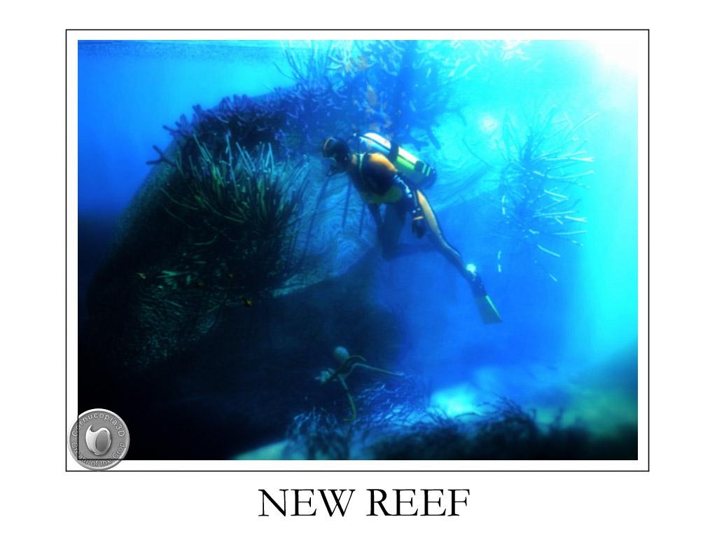 New reeft