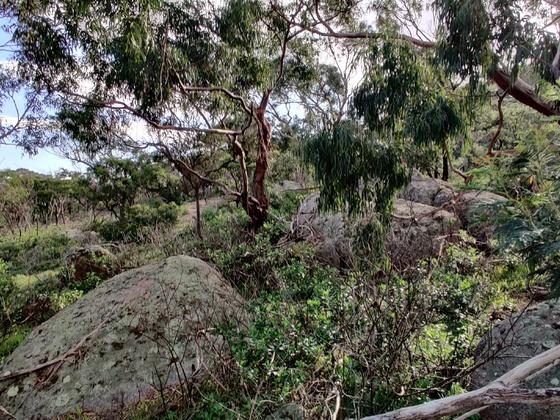 You Yangs Regional Park