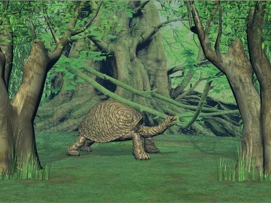 Landschildkröte (219 Jahre alt)