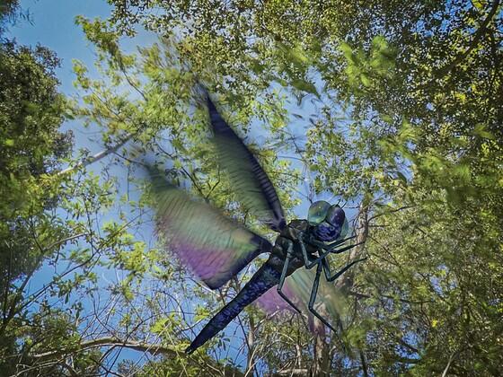 Libellenflug mit Motion Blur