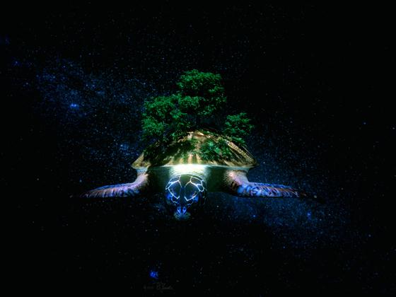 Die Sternenschildkröte
