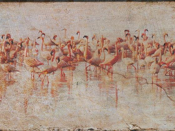 Grunged Flamingos