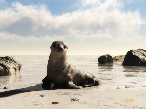 Der kleine Seehund